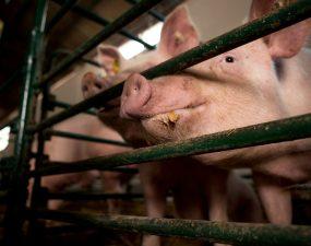 Polacy nie chcą już jeść mięsa